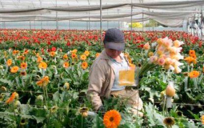 De Antioquia sale el 60 % de las flores que se comercializan en amor y amistad en el país