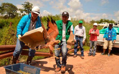 Liberan 287 animales silvestres en ecosistemas estratégicos del Cesar