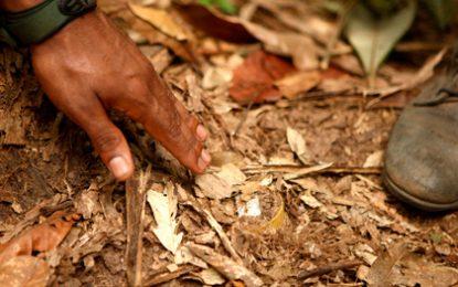 Desminado en Colombia: 188 municipios se han liberado y número de víctimas se ha reducido en un 70%