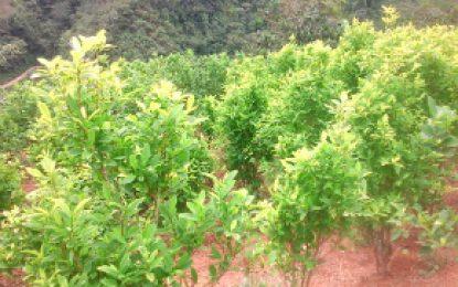 Colombia y ONU suscriben proyecto para fortalecer monitoreo de reducción de cultivos ilícitos
