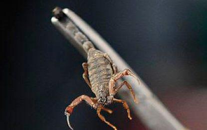 Veneno de escorpión serviría para tratar cuatro tipos de cáncer