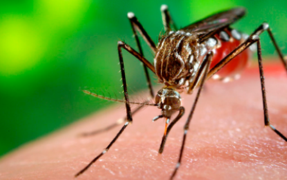 En Miami, liberarán mosquitos para combatir el Zika