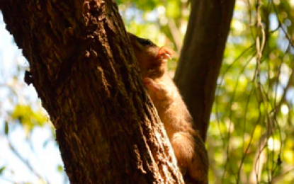 100 animales silvestres rescatados en Bogotá son libres en el Cesar