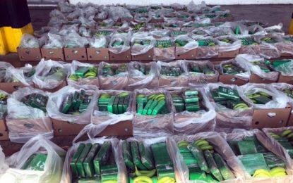 Antinarcóticos decomisaron 1.626 kilos de 'narco-guineos' en el puerto de Santa Marta