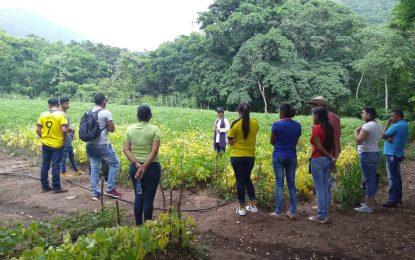 Curso sobre frijol biofortificado para asistentes técnicos del Cesar