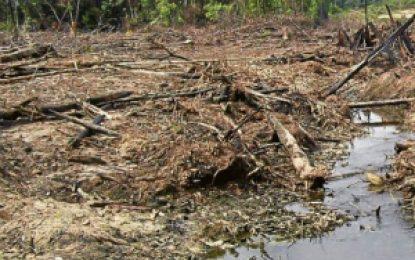 Contraloría alerta sobre el peligro de que desaparezcan las Reservas Forestales en Colombia