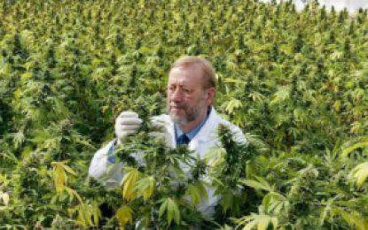 Canadá: A partir de la fecha, es legal la venta de marihuana recreativa