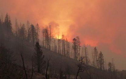 Asciende a 56 el número de muertos por incendios en California; y son 130 los desaparecidos