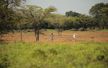 El Banco Agrario anuncia medidas de alivio para agricultores y ganaderos