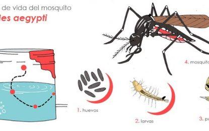 Llamado a los cesarenses para que se sumen a las acciones de prevención contra el Dengue, Chikungunya y Zika