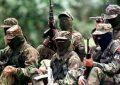 Destruyen 5 laboratorios coqueros del Eln en Bajo Cauca antioqueño