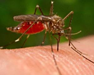 Colombia firma pacto para eliminar la malaria