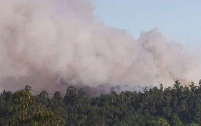 Colombia ofrece apoyo a Brasil para combatir incendios en el Amazonas