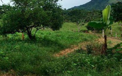 Procuraduría revisará 47 mil 516 casos de restitución de tierras que fueron negados