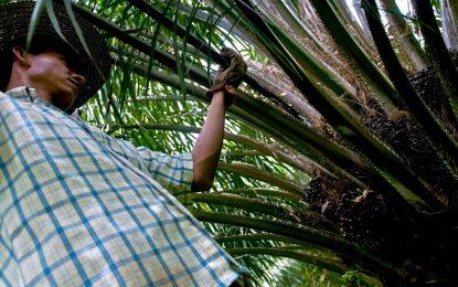 465 trabajadores del Cesar en el 'limbo', tras anuncio de liquidación de Indupalma