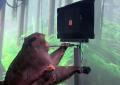 Empresa de Musk muestra a mono con chip implantado usando videojuego