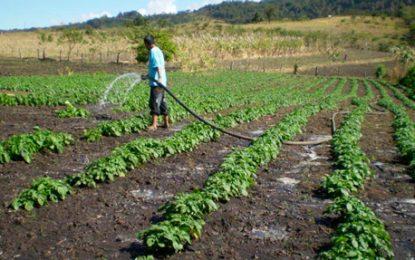 Proyecto Agricel, alternativa pública   para transformar producción agrícola