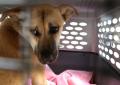 Corea del Sur podría prohibir consumo de carne de perro