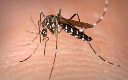 Se complica el panorama del dengue en la región caribe